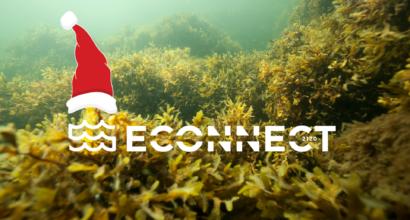 Det finns skog av blåstång under vattnet, ECOnnect projektets logotyp och tomtemössa.
