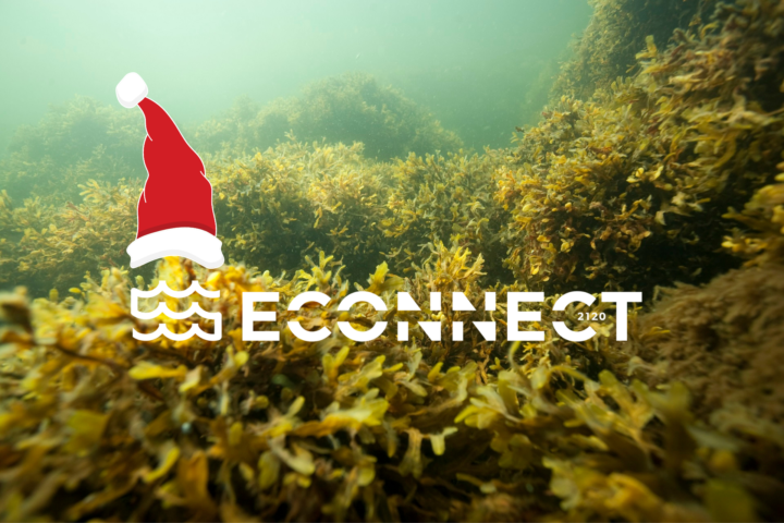 There is underwater bladder wrack forest, the project ECOnnect's logo and a santa hat.